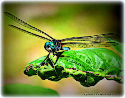 Metal Dragonfly Digital Art - Blue Dragonfly Toon 1 by Sheri McLeroy