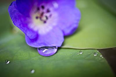 Dew Photograph - Blue Drop by Priya Ghose