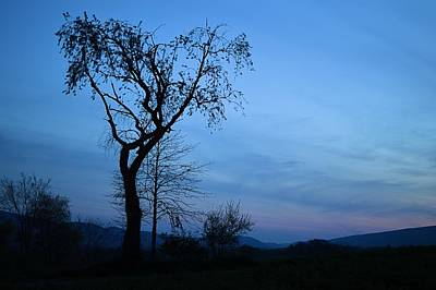 Photograph - Blue Evening Silhouette by Joel E Blyler