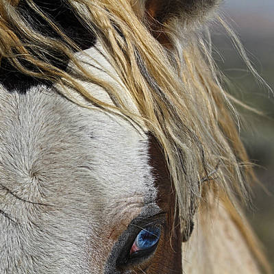 Forelock Photograph - Blue Eyed Beauty by Wes and Dotty Weber