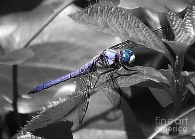 Blue Eyed Dragonfly Art Print