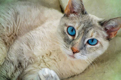 Photograph - Blue Eyed Girl by Kenny Francis