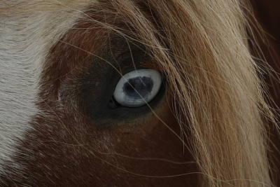 Photograph - Blue Eyed Horse by David Yocum
