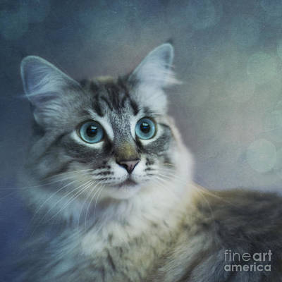 Squint Photograph - Blue Eyed Queen by Priska Wettstein