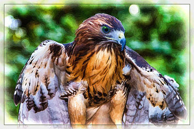 Painting - Blue-eyed Red Tail Hawk by John Haldane