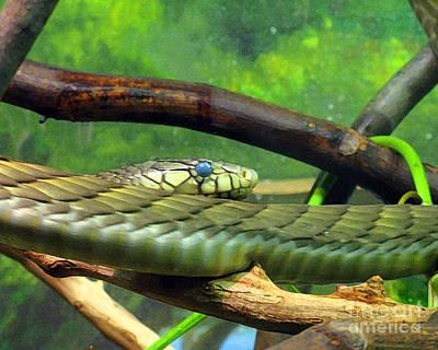 Photograph - Blue Eyed Snake by Patricia Januszkiewicz