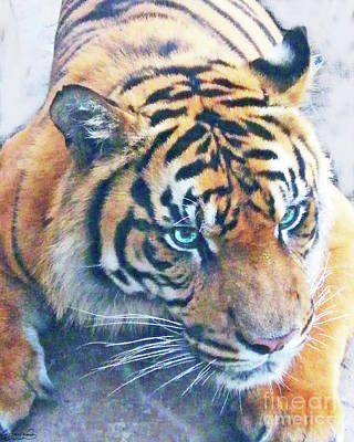 Photograph - Blue Eyed Tiger by Lizi Beard-Ward