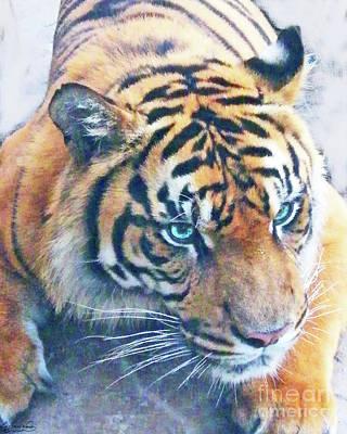 Photograph - Blue Eyed Tiger by Lizi Beard-Ward