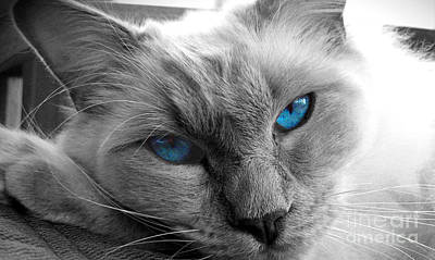 Photograph - Blue Eyes by Amber Nissen