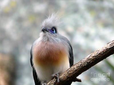 Photograph - Blue Eyes by Avis  Noelle