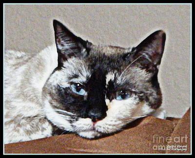 Photograph - Blue Eyes by Bobbee Rickard