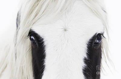 Horse Snow Photograph - Blue Eyes by Carol Walker