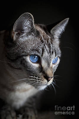 Photograph - Blue Eyes by Diane Macdonald