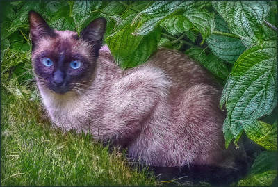 Print featuring the photograph Blue Eyes by Hanny Heim