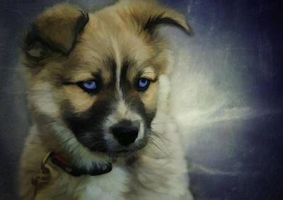 Companion Digital Art - Blue Eyes by Jacque The Muse Photography