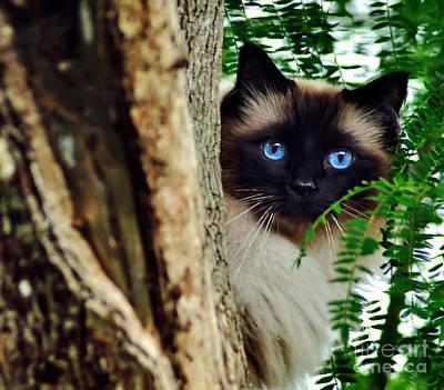 Photograph - Blue Eyes by Kaye Menner