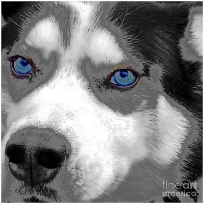 Photograph - Blue Eyes Max by Susan Garren