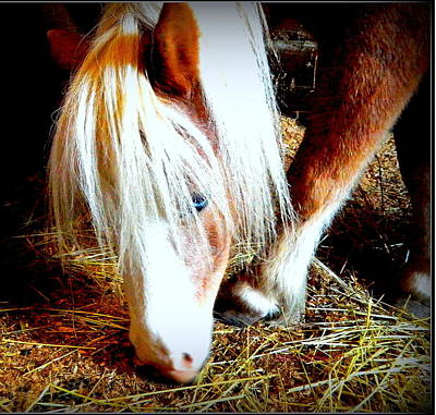 Forelock Photograph - Blue-eyes Mini by Kathy Barney