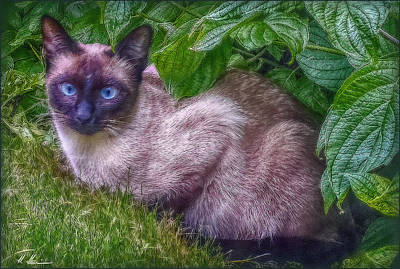 Print featuring the photograph Blue Eyes - Signed by Hanny Heim