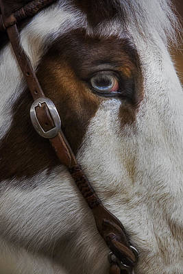 Photograph - Blue Eyes by Susan Candelario