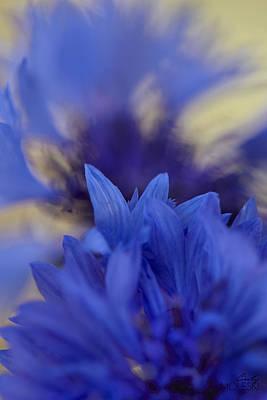 Floral Photograph - Blue Fairy by Cindy Moleski
