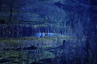 Blue Fantasy Swans Original