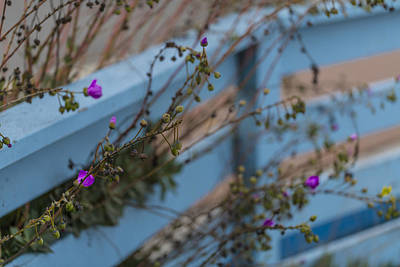 Photograph - Blue Fence Purple Flowers by Scott Campbell