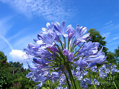 Photograph - Blue Flower by Art Photography