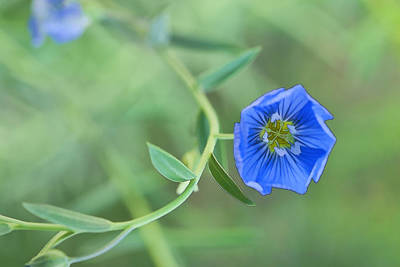 Photograph - Blue Flower  by Gregory Scott