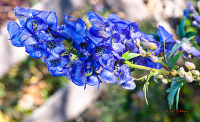 Photograph - Blue Flower In Fall by Edward Peterson
