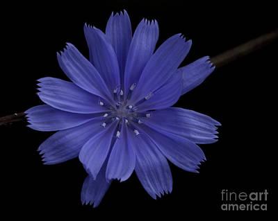 Photograph - Blue Flower by Ronald Grogan