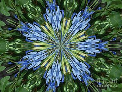Photograph - Blue Flower Star by Annette Allman