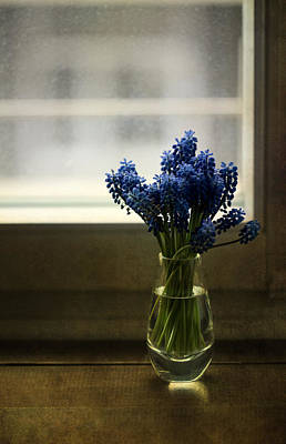 White Grape Photograph - Blue Grape Hyacinth Flowers In The Glass Flowerpot by Jaroslaw Blaminsky