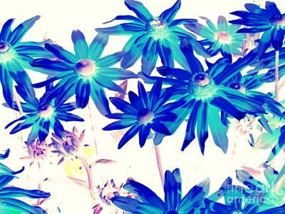 Photograph - Blue Flowers by Pauli Hyvonen