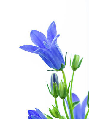 Blue Flowers Photograph - Blue Flowers by Wladimir Bulgar