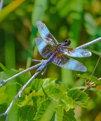 Sports Royalty-Free and Rights-Managed Images - Blue Fly Number Two by David Tennis