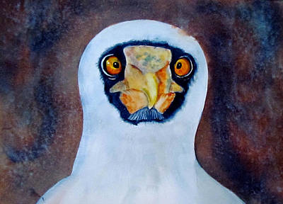 Painting - Blue Footed Booby by Susan Duxter