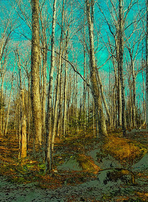 Blue Forest Art Print by David Patterson