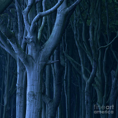 Surrealism Royalty-Free and Rights-Managed Images - Blue Forest by Heiko Koehrer-Wagner