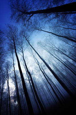 Photograph - Blue Forest by Philippe Sainte-Laudy