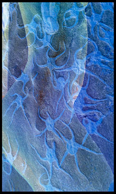 Photograph - Blue Fossil by Deprise Brescia