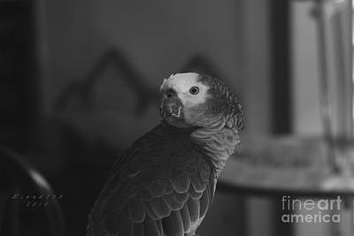 Photograph - Blue Front Amazon Parrot by Melissa Messick