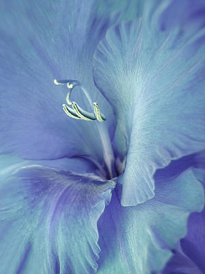 Blue Gladiolus Flower Art Print by Jennie Marie Schell