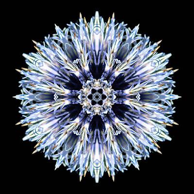 Print featuring the photograph Blue Globe Thistle Flower Mandala by David J Bookbinder