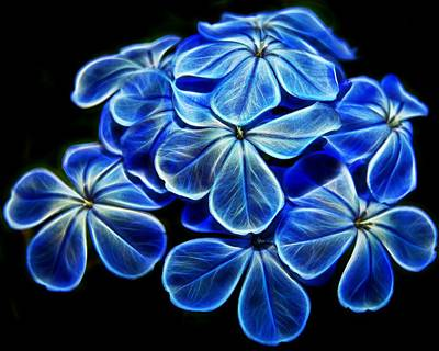 Photograph - Blue Glow by Judy Vincent