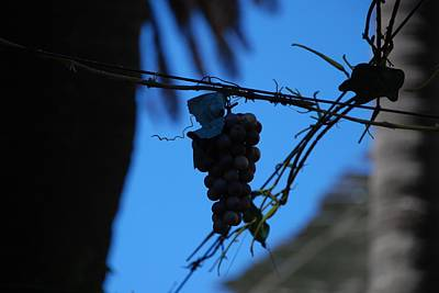 Photograph - Blue Grapes by Dany Lison