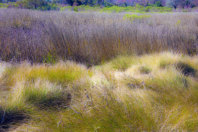 Photograph - Blue Grass by Paula Porterfield-Izzo