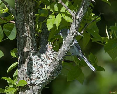 Photograph - Blue-gray Gnatcatcher Nest Dsb240 by Gerry Gantt