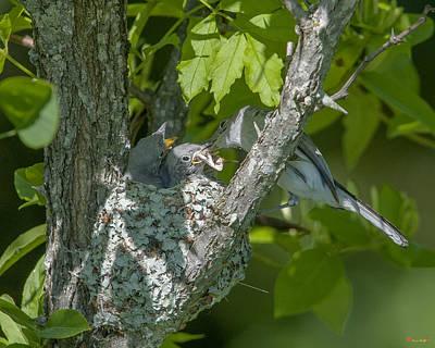 Photograph - Blue-gray Gnatcatcher Nest Dsb250 by Gerry Gantt
