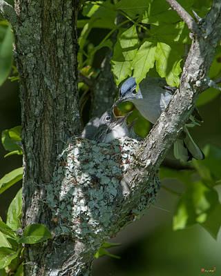 Photograph - Blue-gray Gnatcatcher Nest Dsb251 by Gerry Gantt